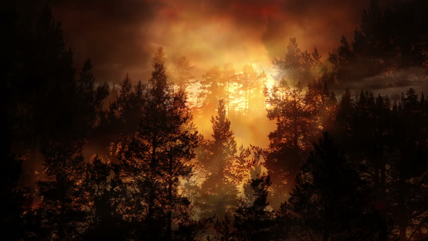 Forest and evening light background animation   Shutterstock HD Video #1012153343
