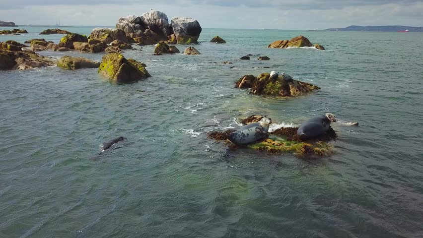 Group of wild grey seals laying on the rocks in the sea near Dalkey Island, Ireland | Shutterstock HD Video #1012661273