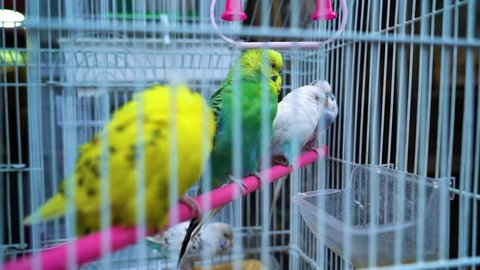 A medium shot of love birds inside a cage. The pigeons are being sold in the market.