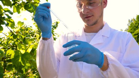 A young handsome (male) biologist or agronomist, takes analyzes of moisture leaves, dna, pipette, in a white coat, goggles, blue rubber gloves, walks across the apple tree.