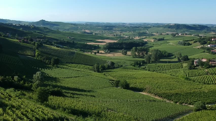 Aerial landscape beautiful green hills of vineyards of Tuscany and Piedmont, Italy. Region wine area langhe, monferrato and roero fields.
