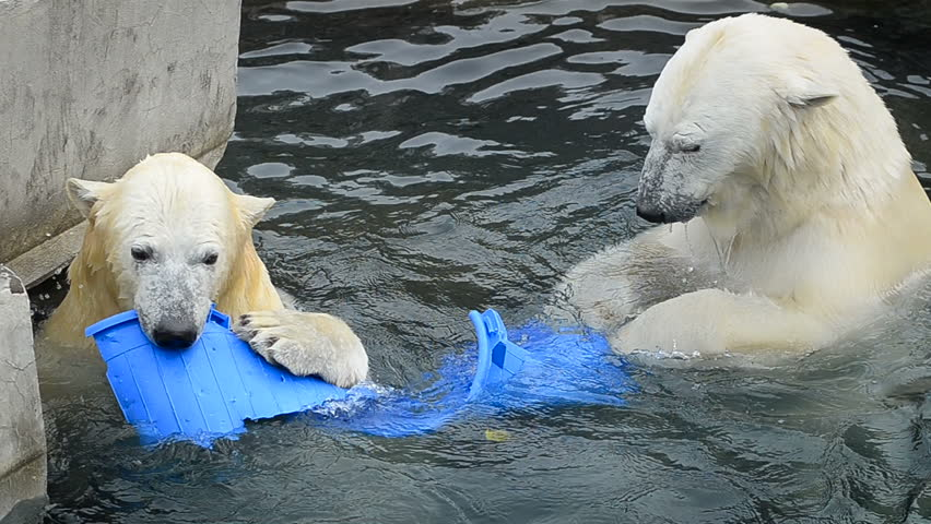Playing polar bears with one plastic can