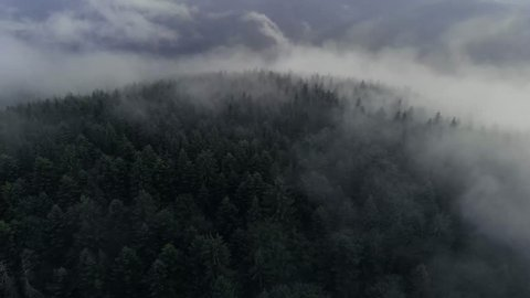 Aerial video over the forest after the rain with clouds and fog. Cinematic video with a forest after the rain. Romanian aerial video of a forest after the rain.