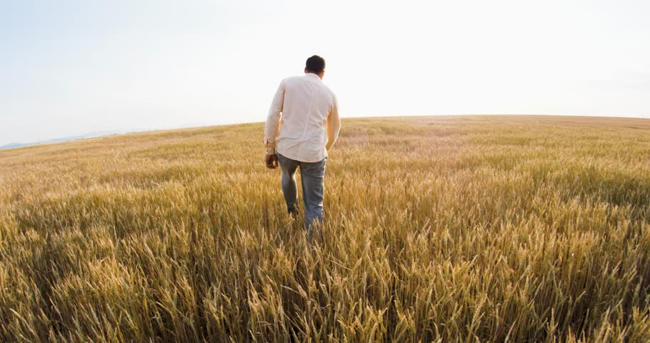 The man goes to the horizon along the golden field of wheat | Shutterstock HD Video #1012962893