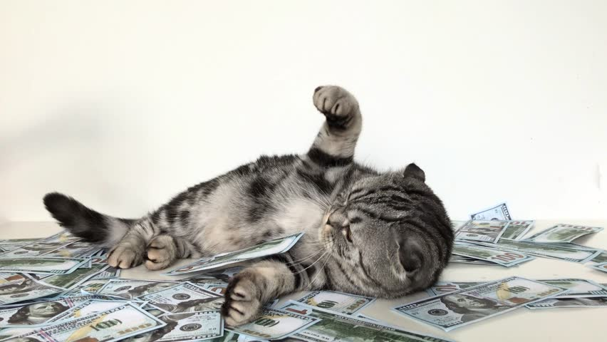 Cat guards the money. The cat beats the hand that is trying to take away the banknotes of money. | Shutterstock HD Video #1013124293