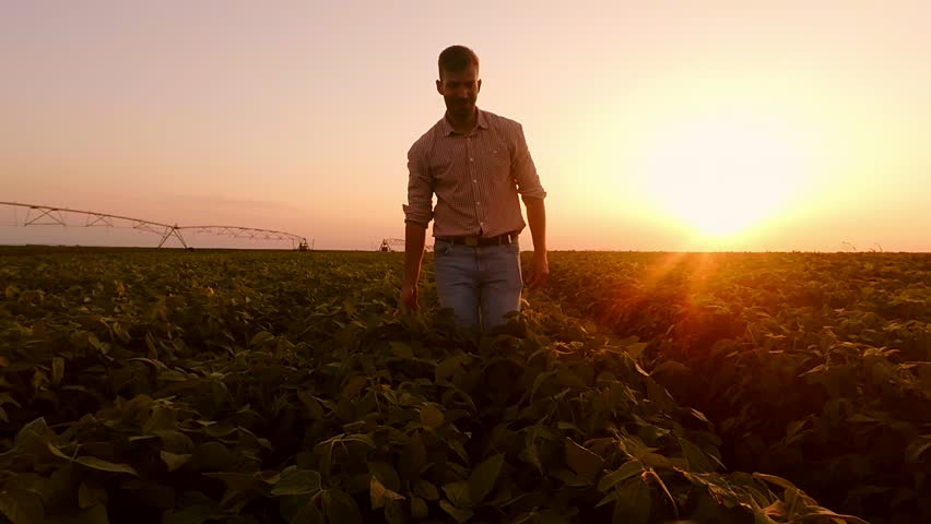 Young farmer walking in a soybean field and examining crop. | Shutterstock HD Video #1013192813