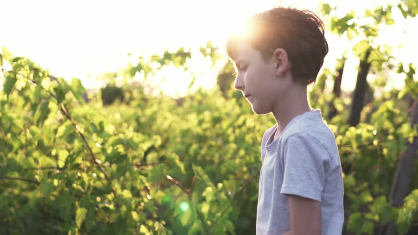 Slow motion a concentrated boy shooting wooden slingshot a pebble at a target against of a green vineyard in the summer at sunset on a sunny day.  A child plays in an active game for boys