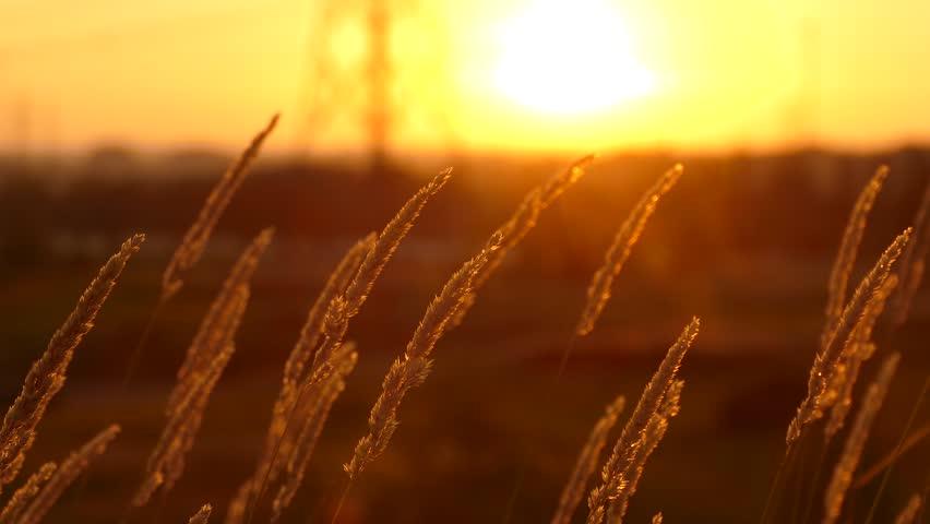 Red sunset during scorching hot summer heatwave in Toronto | Shutterstock HD Video #1013240213