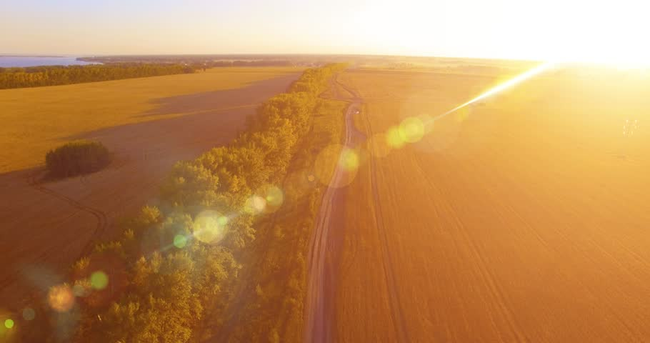 UHD 4K aerial view. Low flight over tree line and yellow wheat rural field at sunny summer day. Green trees, blue sea and sun rays on horizon. Horizontal movement | Shutterstock HD Video #1013306693