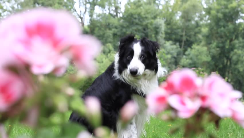 Pink flower and dog