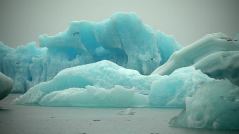 Arctic terns hunting in front of deep blue glowing glacial ice, diving underwater, Jokulsarlon Iceland.