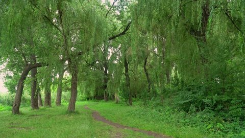 4k Walk Through The Woods