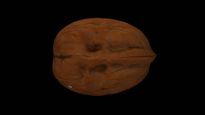 Realistic render of a rotating walnut on transparent background (with alpha channel). The video is seamlessly looping, and the object is 3D scanned from a real walnut.