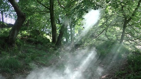 Eerie smoke in a Cumbrian forest, sunlight beaming down though the thick woodland