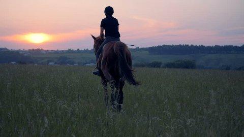 Horsewoman gallops through a field, back view.