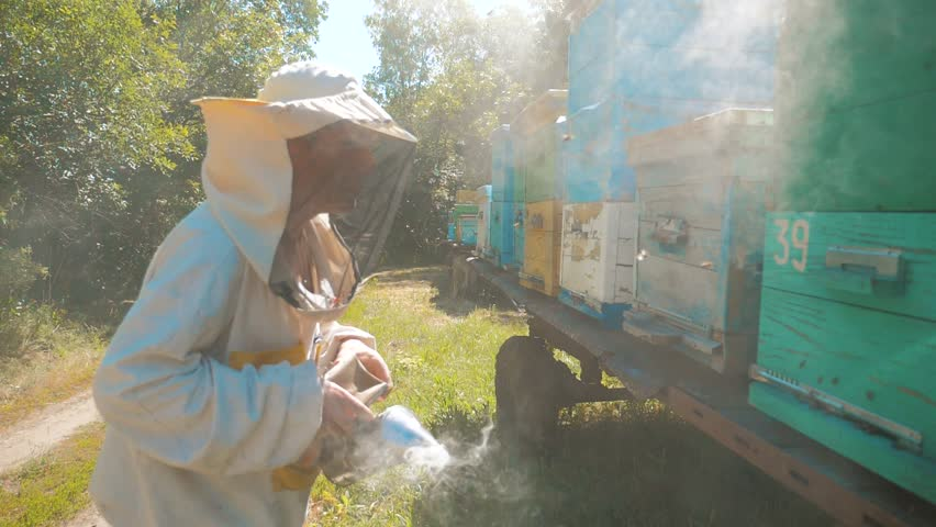 bee-maker beekeeper man working of a smoke pipe beeper smoker device for repelling evil bees. slow motion video. apiary. beekeeping concept agriculture bee lifestyle