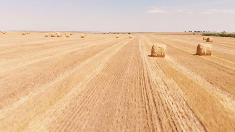 Rural field in summer with bales of hay. Aerial view rolls haystacks straw on field, after harvesting wheat. Landscape of Ukraine. Drone footage. Camera forward movement.