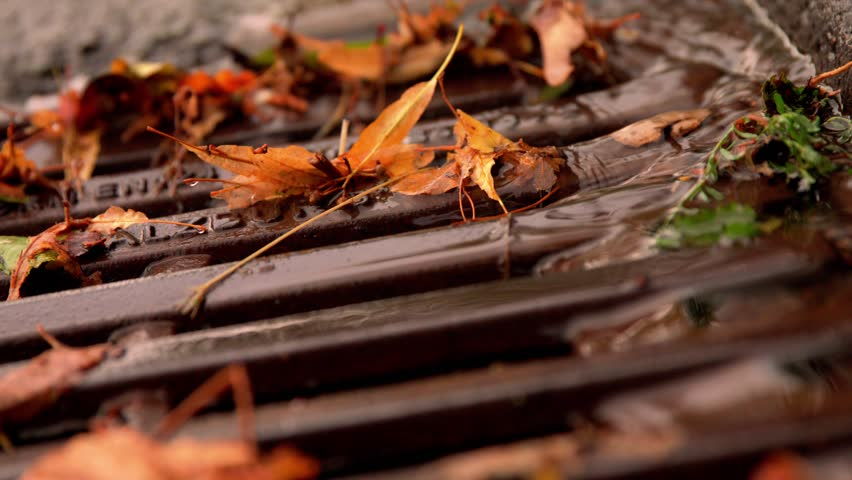 Leaves get flooded on the street | Shutterstock HD Video #1014340313