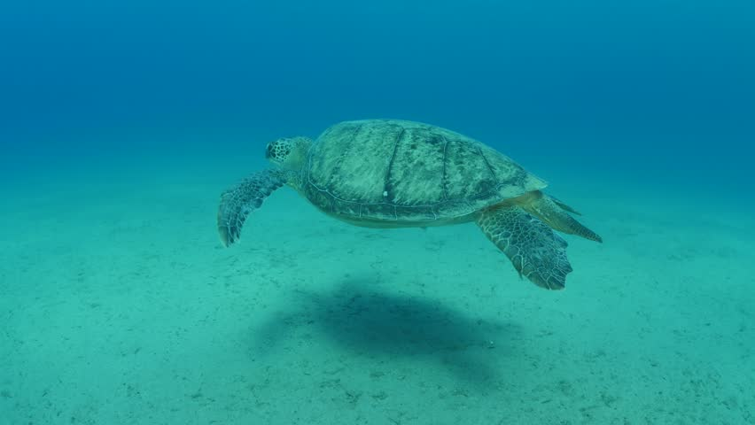 turtle underwater swim slowly #1014478253