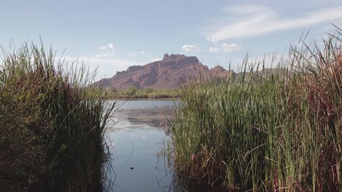 4k shot of the Red Mountain in Arizona obscured by reeds over the Salt River.