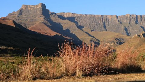 View of the Amphitheater and waving grasses, Drakensberg mountains, Royal Natal National Park, South Africa