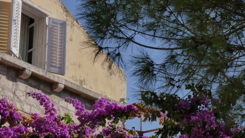 Colourful flowers and shuttered window in Korcula Town, Korcula Island, Dalmatia, Croatia, Europe