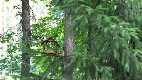 The birds take turns flying in and eating from birdhouse. One ate, it drove the other and also ate.