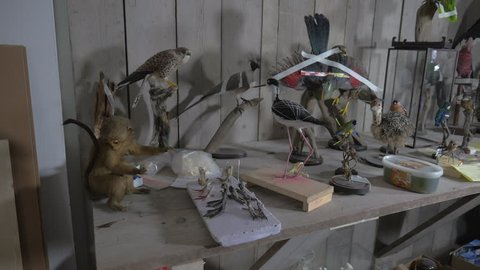 Taxidermy workload in the shop