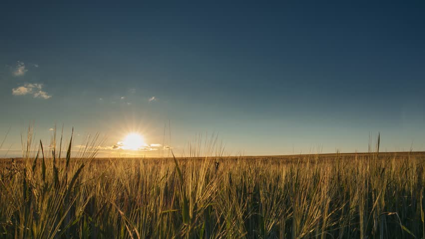 Summer Sun Shining Above Agricultural Landscape Of Young Green Wheat Field. Time Lapse, Timelapse, Time-lapse | Shutterstock HD Video #1014826153