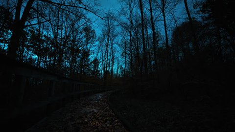 Beautiful cinematic forests of Mammoth Cave National Park at night after dusk as wind blows late fall trees & barren branches sway in breeze while light from  sky streams by silhouettes of the trees.