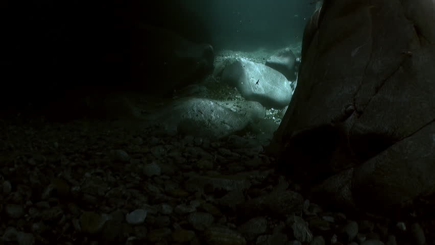 Underwater landscape of river Verzasca. on background of huge smooth stones. Picturesque nature and rocks in canton of Ticino are favorite place for underwater photographers. | Shutterstock HD Video #1015244203
