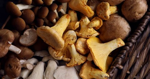 Top view of variety of uncooked wild forest mushrooms in a wicker basket on a black background, Rotation 360. Mushrooms chanterelles, honey agarics, oyster mushrooms, champignons, portobello, shiitake