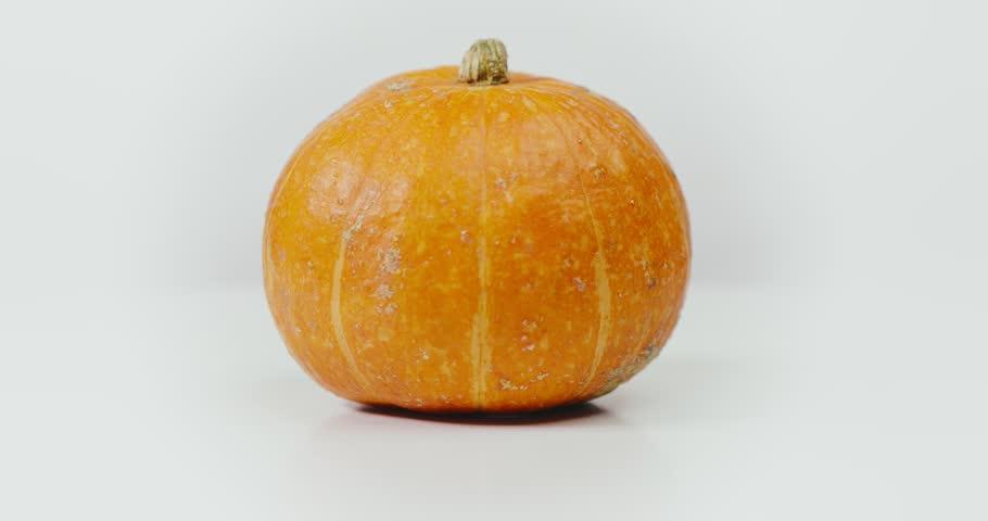 Orange big pumpkin isolated on white background. Image of fresh rotating pumpkin on white background seamles loop