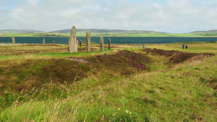 Blossoming and colourful flower field surrounding the Ring of Brodgar from Neolithic times, Orkney islands, Scotland