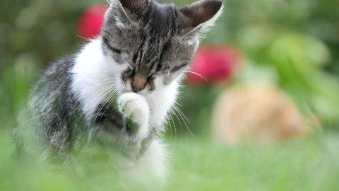 Little Cat in the Garden Clean Her Beautiful Fur