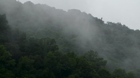 Thick white fog covering the green forests of the Appalachian mountain side.