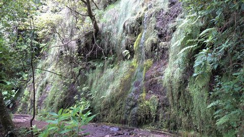 Small waterfall, hike from Portela to Ribeiro Frio along the levada da Portela, in the heart of the Laurissilva forest, listed as World Heritage
