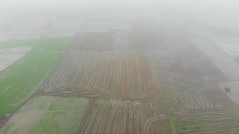 Aerial View of Mist on Rice Field Area in Phitsanulok Province, THAILAND