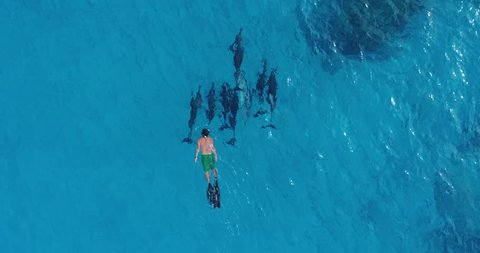 Slow motion aerial footage of a man swimming close to spinner dolphins in Kailua Kona, Hawaii