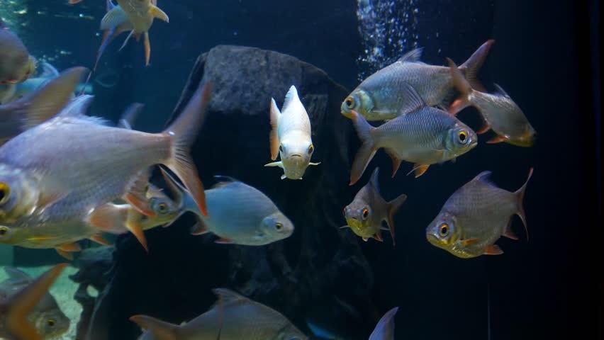 Besutiful fish in fish tank. Aquarium design .   Shutterstock HD Video #1016350933