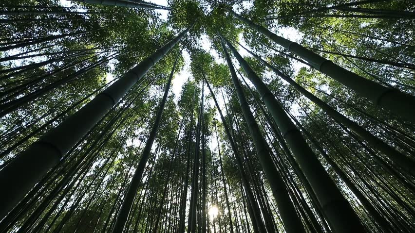 This is a picture of bamboo forest. It is a view from the low angle of the windy bamboo forest, clear sky, and the clouds.