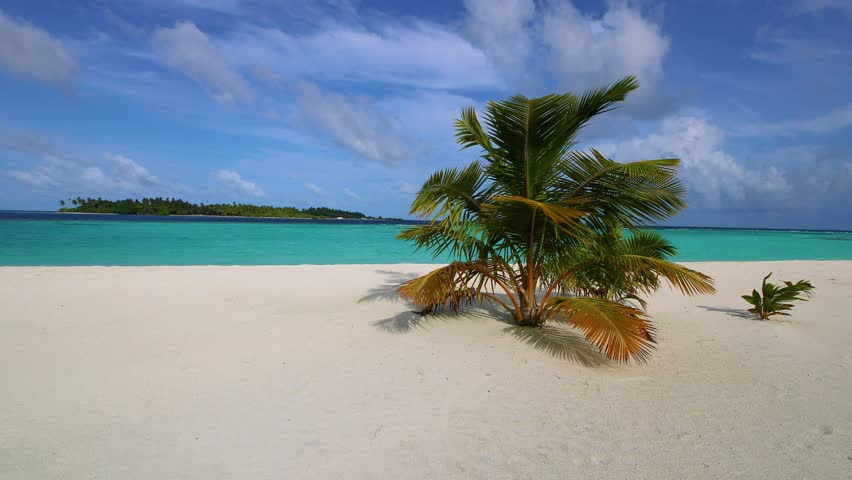 Maldives sandy beach with palm trees. Video in motion. Tropical island. | Shutterstock HD Video #1016583523