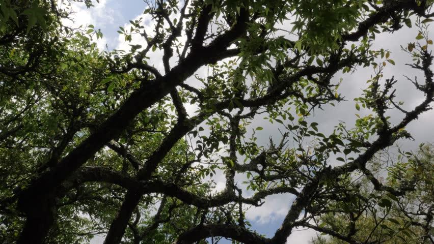 Kyoto, Japan - 05 04 2017: Turning around trees in Kyoto, Japan | Shutterstock HD Video #1016603413