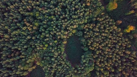 4k AERIAL: Top down view on European mixed forest in autumnal colors. 3840x2160, 30fps.