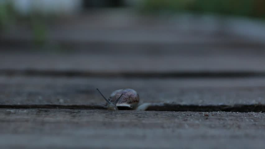The Snail Crawls In Evening
