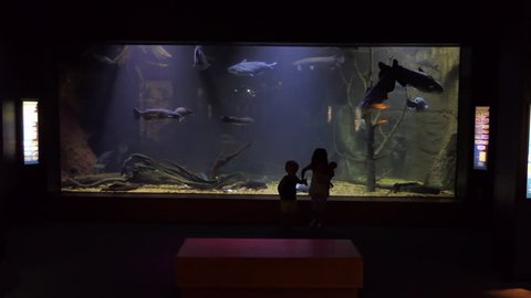 JACKSON, MISSISSIPPI / USA - JULY 2018: The MDWFP Museum of Natural Science in Jackson, Mississippi, United States. Children looking at diorama of Pearl River natural environment with fish swimming