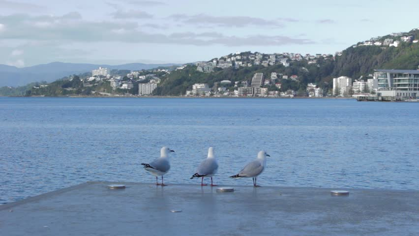 3 seagulls stand over the water before one takes flight on the Wellington waterfront.