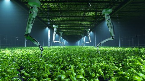 Robotic arms looking after fresh, young, green plants in a vast, modern, foggy greenhouse. Soft, cold spotlights illuminate the leaves revealing their natural, vibrant, healthy color.