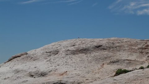 wide angle video of single white and black african penguin,  seen from a distance, standing on a brown massive rock, , outdoors on a sunny summer day with blue sky in Simons Town, South Africa
