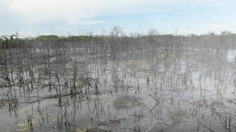 Aerial view of mangroves borrowing early, dead and rotting.